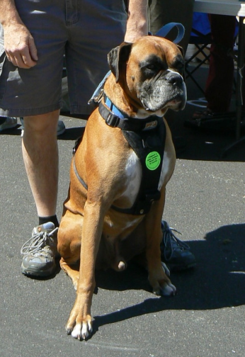 Baxter, and over 1240 others at the City of El Cerrito worldOne July 4th Festival, happily displayed his support for a safe, modern library for El Cerrito.